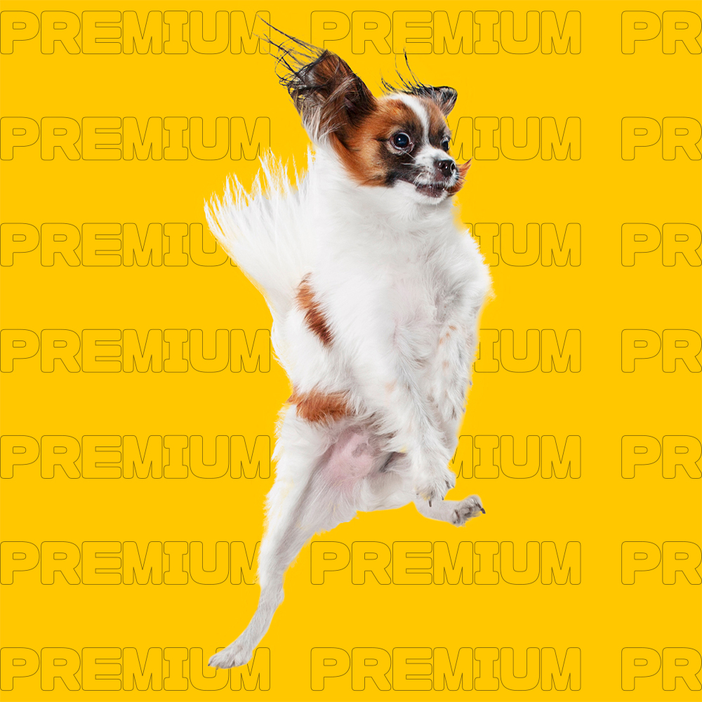 Young,Dogs,Jumping,,Playing,,Flying.,Cute,Doggies,Or,Pets,Are